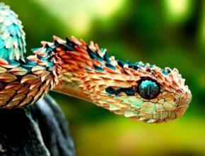 Coolest Animal Species