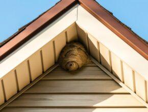 Wasp Nest Under Eaves